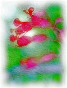 Red Buckeye Print by Judi Bagwell