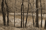 Kathleen Holley - Red Bud Run in Sepia