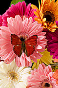Bright Still Life Prints - Red butterfly on bunch of flowers Print by Garry Gay
