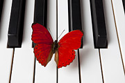 Piano Prints - Red Butterfly On Piano Keys Print by Garry Gay