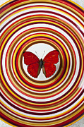 Vertical Flight Prints - Red butterfly on plate with many circles Print by Garry Gay