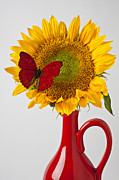Sunflower Art - Red butterfly on sunflower on red pitcher by Garry Gay