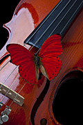 Music Instrument Posters - Red Butterfly On Violin Poster by Garry Gay