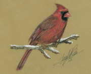 Bird Pastels Posters - Red Cardinal Poster by Terry Kirkland Cook