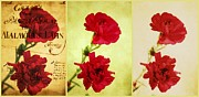 Carnations Prints - Red Carnations Print by Cathie Tyler