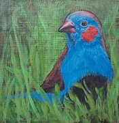 Red Finch Originals - Red-cheeked Cordon Bleu by Karen Bradley