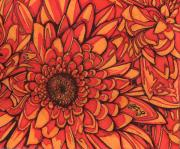 Texas Drawings - Red Chrysanthemum by Will Stevenson