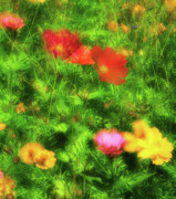 Multiple Exposures Prints - Red Cosmos - blown by the breeze Print by Thomas Schoeller