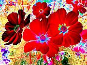 Red Cosmos Print by Will Borden
