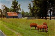 Red Cows On Grapevine Road Print by Doug Strickland