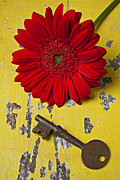 Chrysanthemums  Posters - Red Daisy and Old Key Poster by Garry Gay