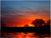 Sunrise Photos - Red Dawn by Joyce Dickens