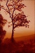 Red Leaves Photo Originals - Red Dawn by Linda Sannuti