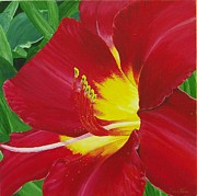 Tom Faires Paintings - Red Daylily by Thomas Faires