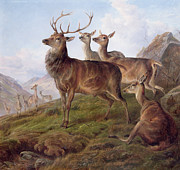 Red Deer Posters - Red Deer in a Highland Landscape Poster by Charles Jones