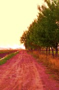 Michael Maynor Art - Red Dirt Road by Michael Maynor