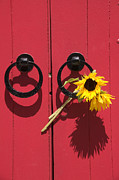 Handles Posters - Red door sunflowers Poster by Garry Gay