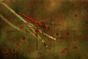Insects Mixed Media Metal Prints - Red Dragonfly Dining Metal Print by Bonnie Bruno