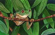 Red-eyed Tree Frog Painting Prints - Red-Eyed Tree Frog I Print by Anita Riemen