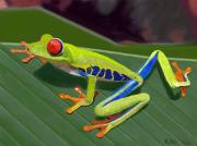 Kenny Chaffin - Red-Eyed Tree Frog