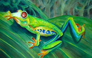 Wildlife Mixed Media Originals - Red-Eyed Tree Frog on Leaf by Myra Evans