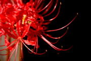 Realistic Photos - Red Flames by Susanne Van Hulst