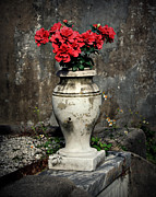 Graveyards Posters - Red Flowers In Vase Poster by Perry Webster