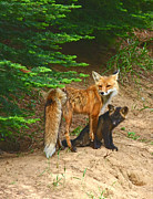 Fox Pyrography Posters - Red Fox and Kit Poster by Marvil LaCroix