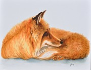 Jolaine Goldman - Red Fox