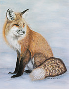 Winter Drawings Posters - Red Fox Poster by Lena Auxier
