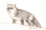 Snow Scene Drawings Originals - Red Fox by Sharon Blanchard