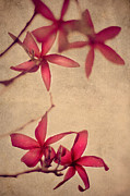 Flora Art Prints - Red Frangipani Flowers. Touch of Japanese Style Print by Jenny Rainbow