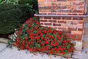 Red Geraniums Prints - Red Geraniums by Wall Print by Jim Vansant