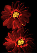 Double Image Paintings - Red Gerber Daisies  by David Rufo