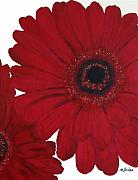 Poster  Painting Posters - Red Gerber Daisy Poster by Marsha Heiken