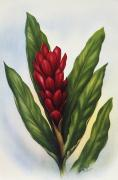 Hawaiian Art Painting Acrylic Prints - Red Ginger Acrylic Print by Hawaiian Legacy Archive - Printscapes