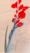 Gladiola Drawings - Red Gladiolas by Dayton Claudio