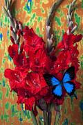 Glads Prints - Red Gladiolus and blue butterfly Print by Garry Gay