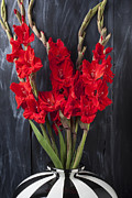 Red Gladiolus Photos - Red gladiolus in striped vase by Garry Gay