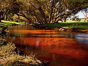 Australian Landscape Prints - Red Gully Print by Heather Thorning