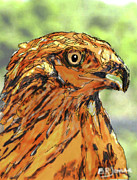 Barry Jones - Red Hawk