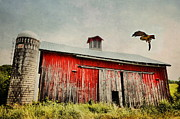 Abandoned Barn Posters - Red Hawk Poster by Emily Stauring
