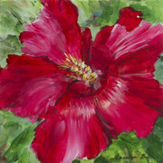Carolyn Bell - Red Hibiscus