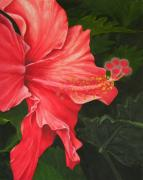 Mary Deal Framed Prints - Red Hibiscus Framed Print by Mary Deal