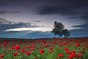 Dusk Photo Prints - Red Hoods Print by Evgeni Dinev