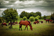 Cloudy Day Prints - Red Horses Print by Carlos Caetano