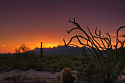 Southwest Landscape Metal Prints - Red Hot Sunset  Metal Print by Saija  Lehtonen