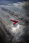 Shoe Photos - Red Is Swimming by Joana Kruse