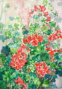 Phong Trinh Metal Prints - Red Ivy-leafed Pelargoniums Metal Print by Phong Trinh