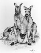 Koala Originals - Red Kangeroos by Bob Patterson
